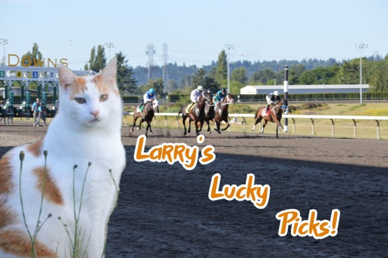 Larry the SportsCat reveals his Kentucky Derby bets